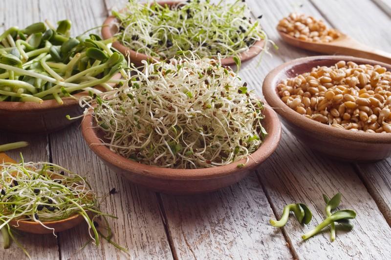 Les graines germées – une bombe nutritionnelle