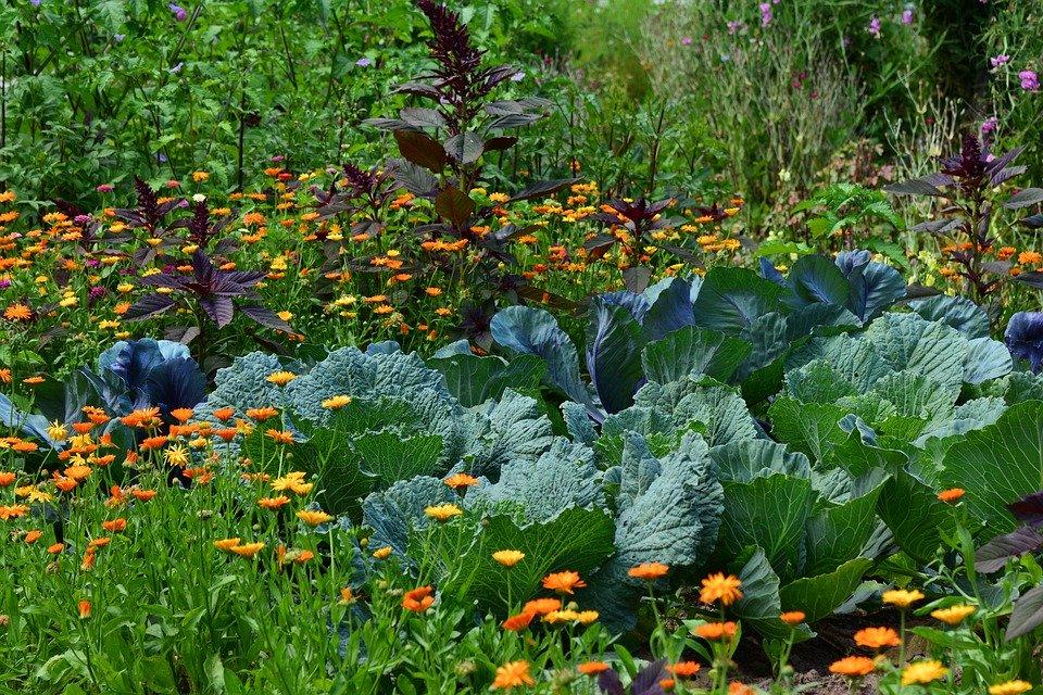 La permaculture et la naturopathie