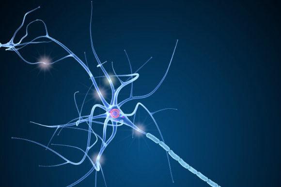 Psychologie positive et neuroplasticité